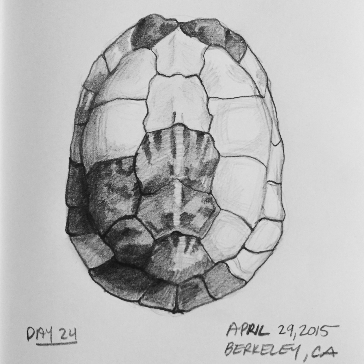 Common box turtle Common box turtle 1842 drawing